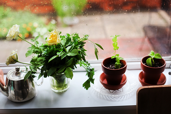 windowsill hospital for plants